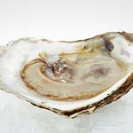 Oysters for preparing for great sex