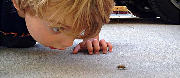 The Bee Whisperer My son