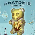 Anatomy-of-a-Gummy-Bear-tn