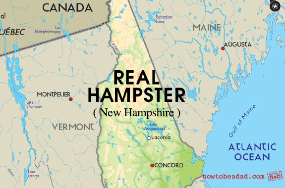 Real-Hampster
