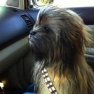 chewbacca-real-tn