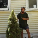 get-rid-christmas-tree-tn